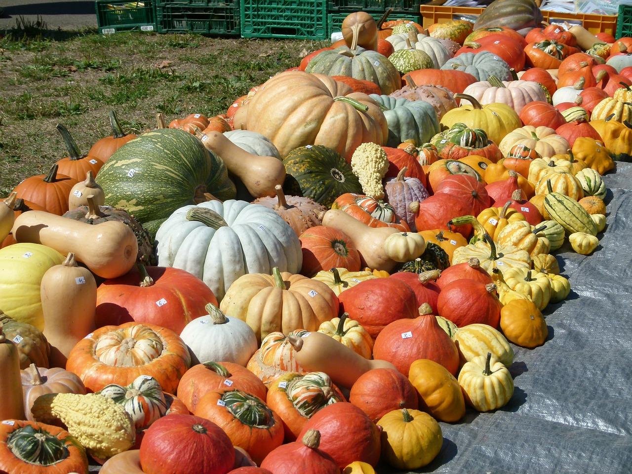 pumpkins-186479_1280